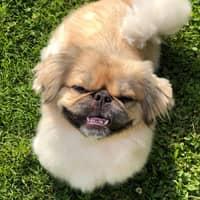Daisy G.'s profile image