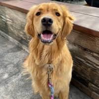 Martha Ann's dog boarding