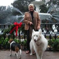 Shirl's dog day care