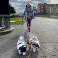 Seanna's dog boarding