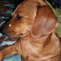 Terri R.'s profile image