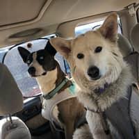 Christine's dog day care