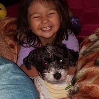 Damaris's dog day care