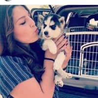 Raylene's dog day care