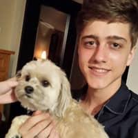 Theo's dog boarding
