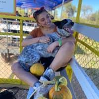 allie's dog boarding