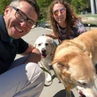 Robert & Erica's dog day care