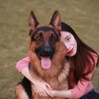 Helena Haixingyu's dog day care