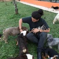 Emre's dog day care