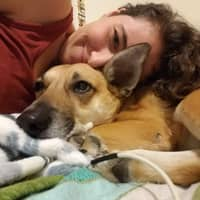 Iliana's dog day care