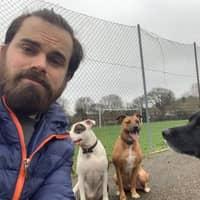 Juan Antonio's dog day care