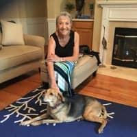 Lillian's dog day care