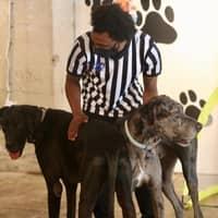 Maurice's dog day care
