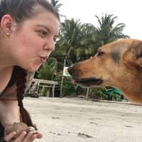 Chloe's dog boarding
