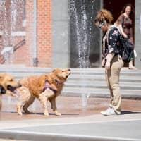 dog walker Irene