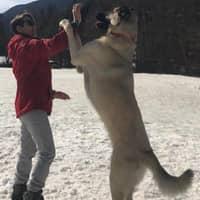 Ozge's dog boarding