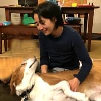 Ponyo's dog boarding
