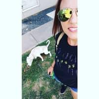 Jerri's dog day care