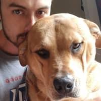 dog walker William