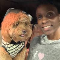 Debbi's dog day care