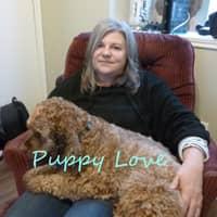 Jeanine's dog day care