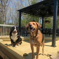 Treesa & Daniel's dog day care