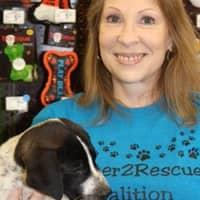 Lynda's dog day care