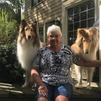 Linda's dog boarding