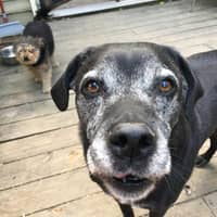 Madelaine's dog day care