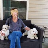Carol & Amber's dog day care