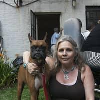 Lynne's dog day care