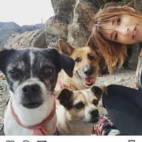 Alojamiento de perros de Verónica