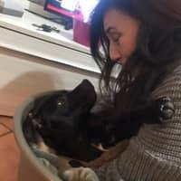 Dog sitting soggiorno di Loredana