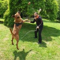 L'hébergement pour chien de Badr